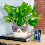 Fair Trade Cat Felted Planter