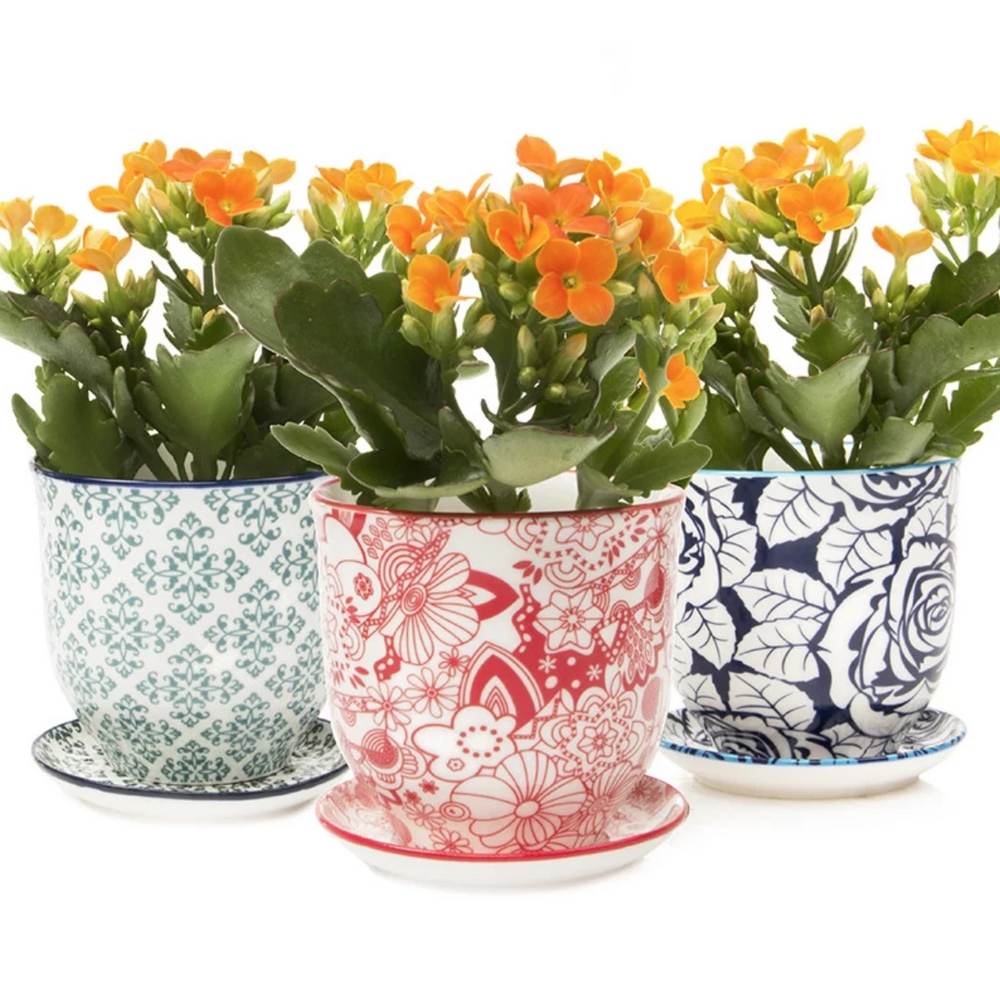 "Liberte Planter 3"", Assorted Styles"