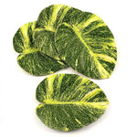 Pothos Coaster, Set of 4
