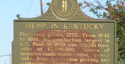 Industrial hemp field