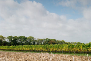 The Vineyard & The Weather<br>Throughout the Year