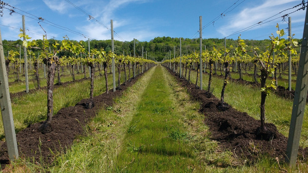 Westwell Wines Compost on Vines