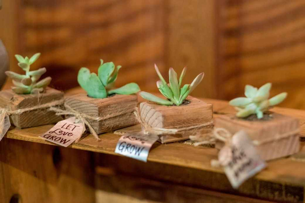 Succulents Plants Wedding Favor Ideas Under $1 Cheap Affordable Inexpensive Planning Advice New Bride
