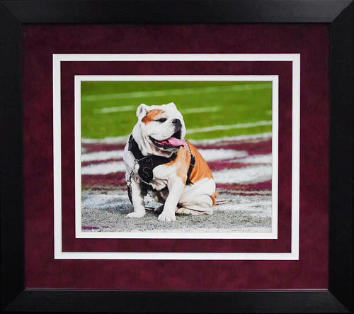 Mississippi State Bulldogs Bully 8x10 Framed Photograph (Field)