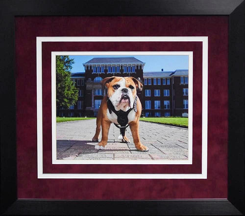 Mississippi State Bulldogs Bully 8x10 Framed Photograph (Campus)