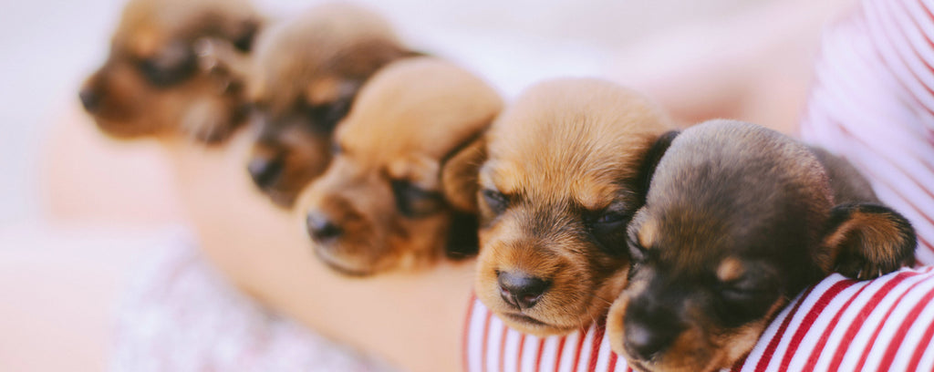 Getting a puppy? Here's 13 must-have puppy products...