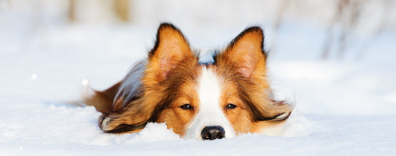 4 tips for caring for your dog's health this winter