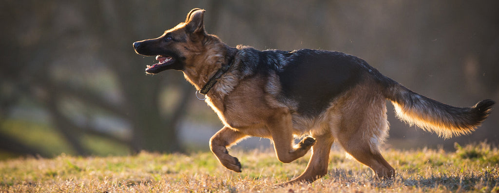 Training collars – Greater freedom from greater control