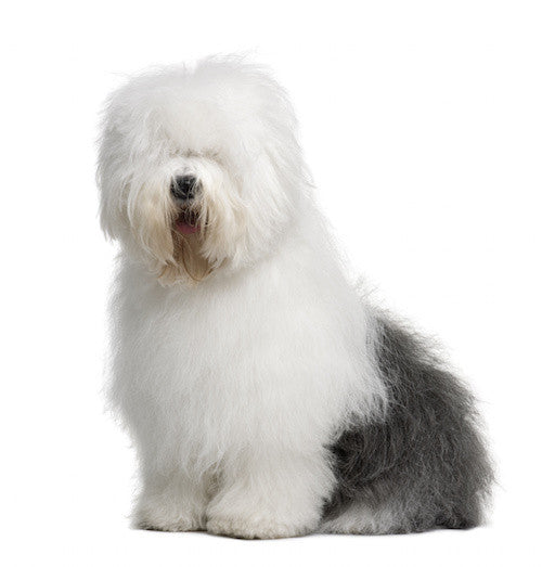 Old English Sheepdog DVD