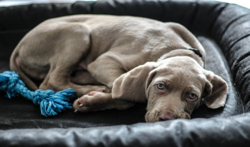 Tips On Crate Training Your Puppy