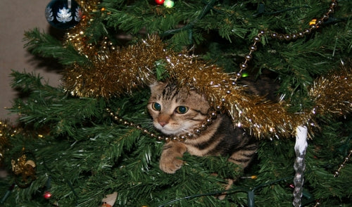 Keep Pets and Christmas Trees Separate