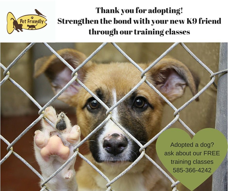 Free Training with Adoption