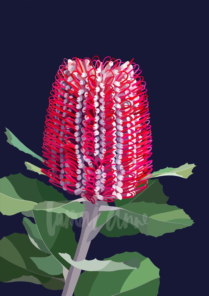 Banksia Coccinea Limited Edition Print