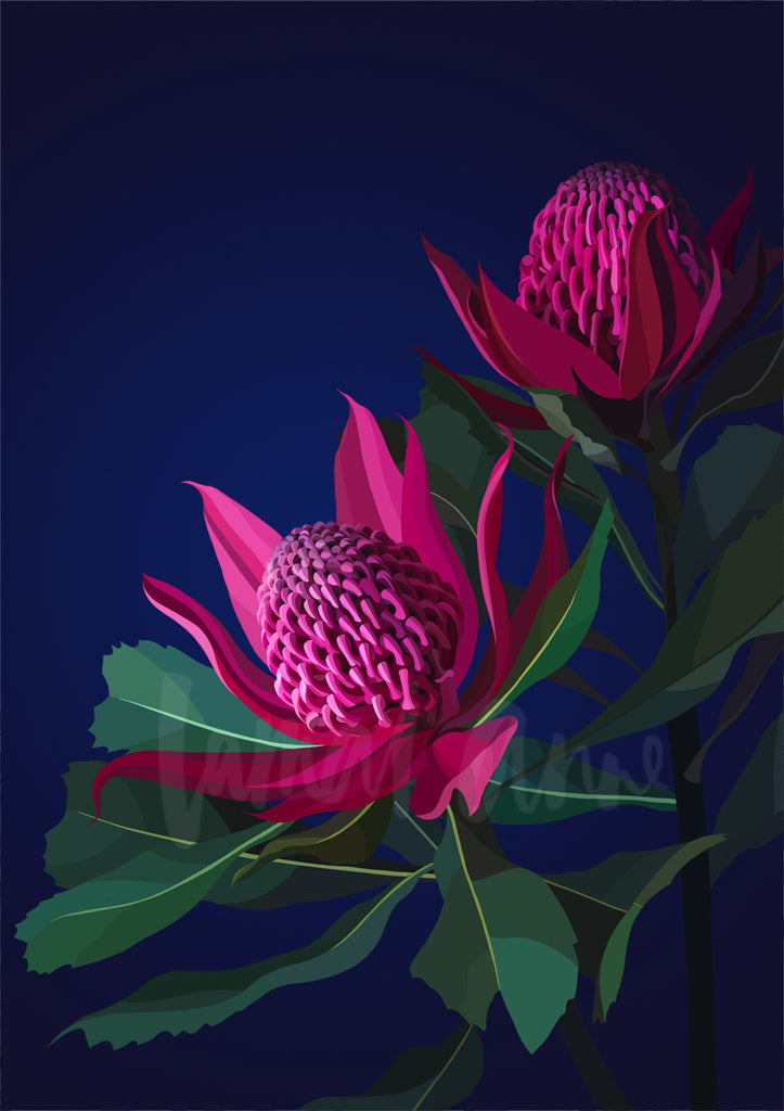 Berry Waratahs Limited Edition Print