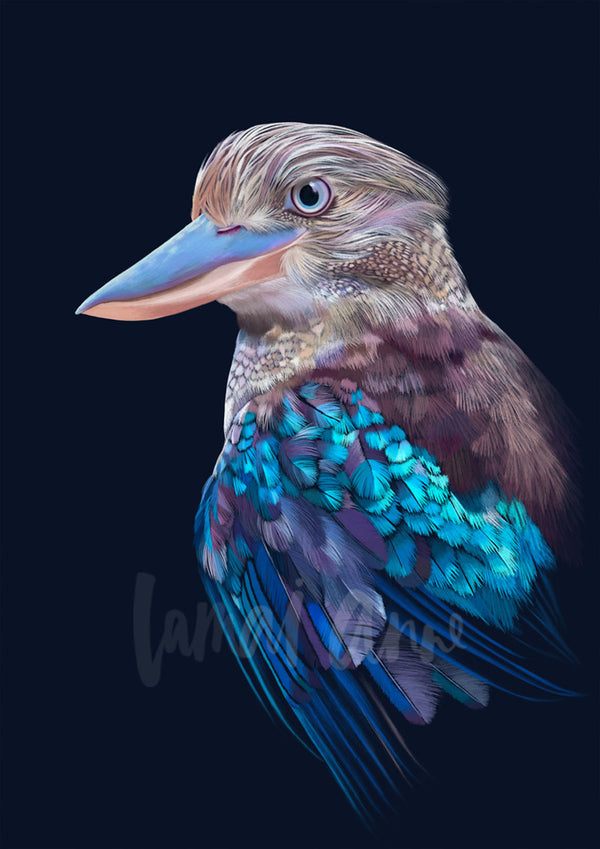 Blue-winged Kookaburra Limited Edition Art Print