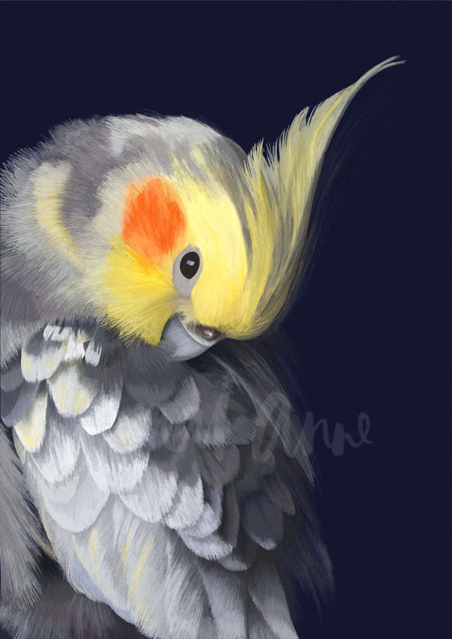 Cockatiel Limited Edition Print