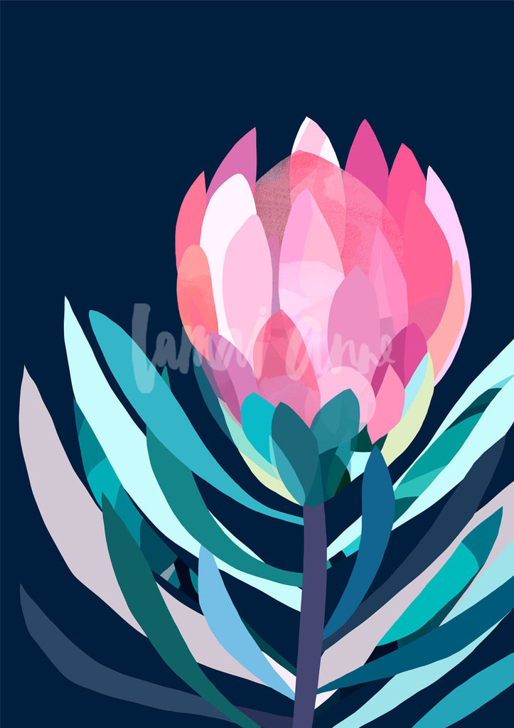 Cora Protea on dark Limited Edition Print