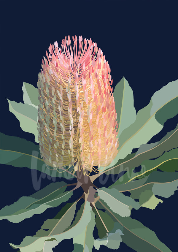 Banksia on dark background Limited Edition Print