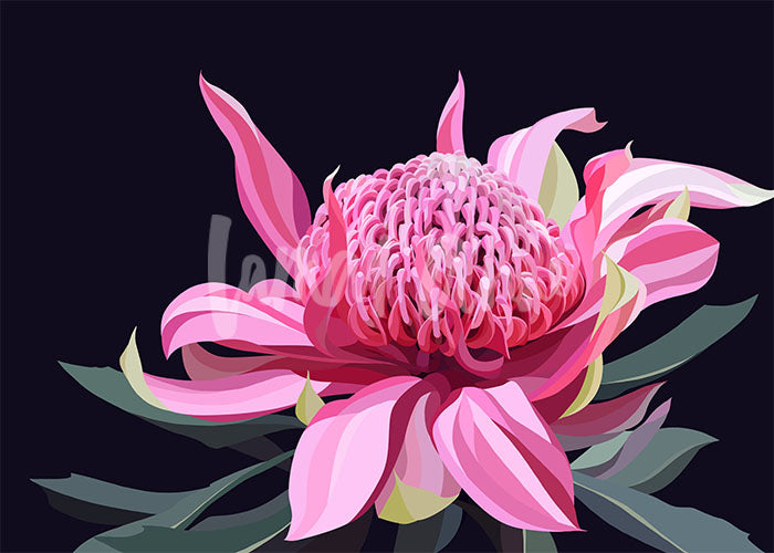Dark Waratah Limited Edition Print