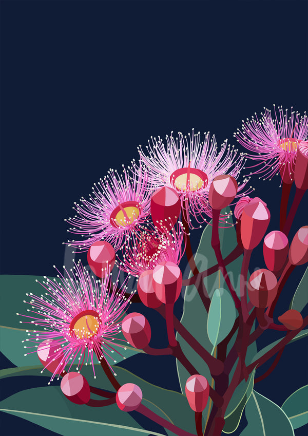 Eucalyptus Bloom ll Limited Edition Print