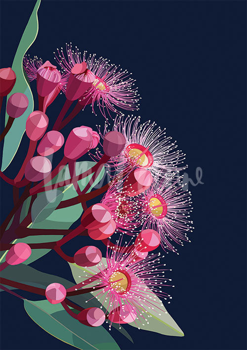 Flowering gum on navy background Limited Edition Print