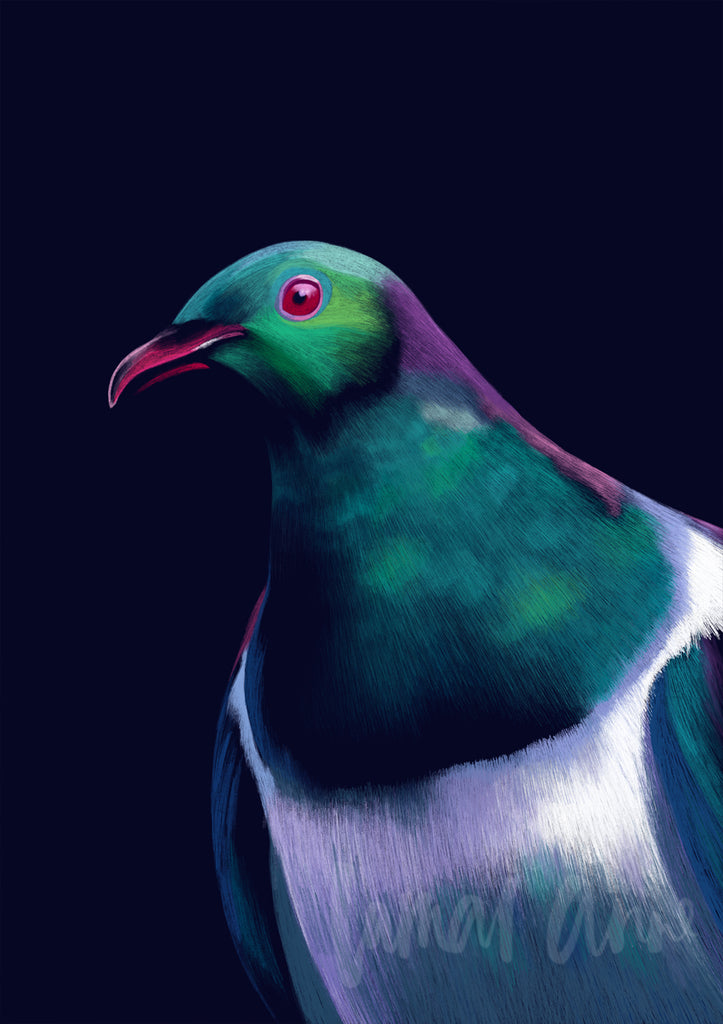 Kereru New Zealand Wood Pigeon Limited Edition Print