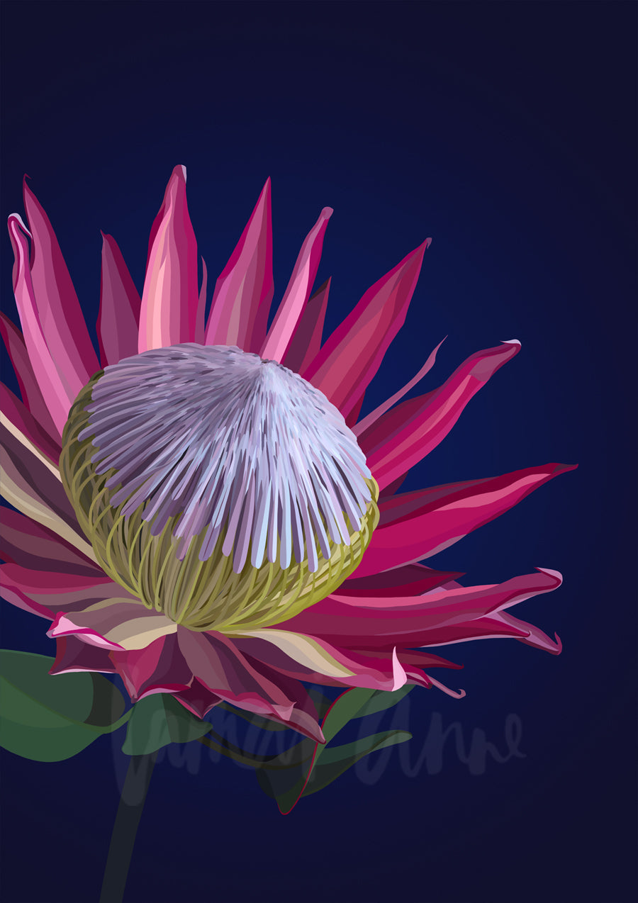 Dark King Protea Limited Edition Print
