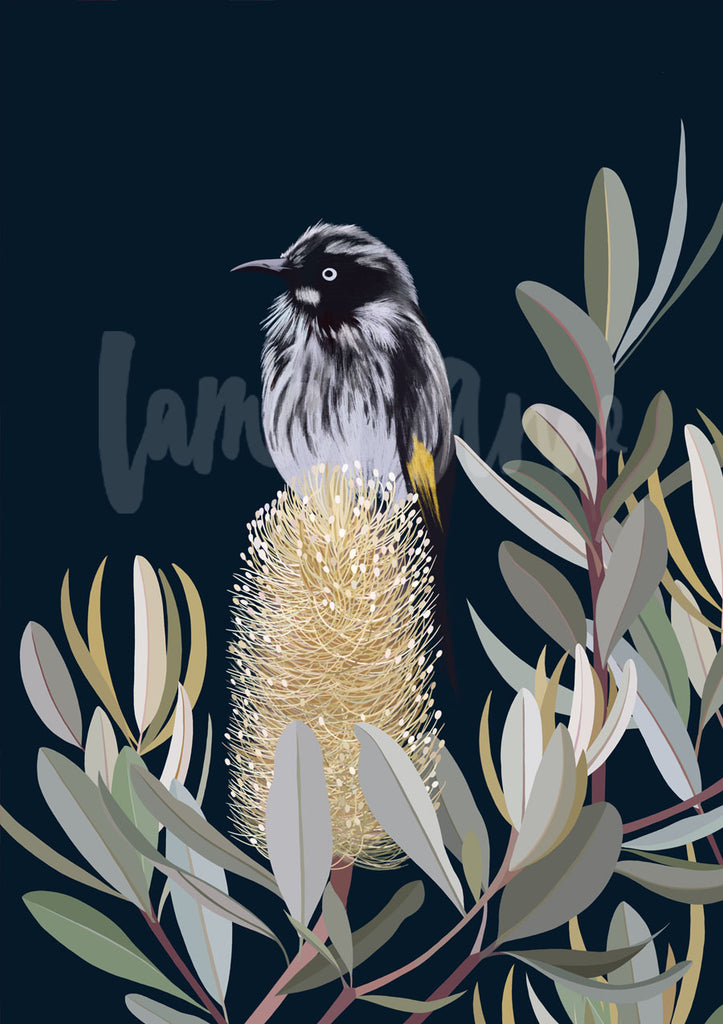 New Holland Honeyeater in a Banksia Tree Limited Edition Print