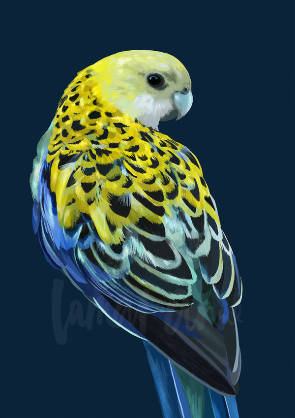 Pale Headed Rosella on Navy Limited Edition Print