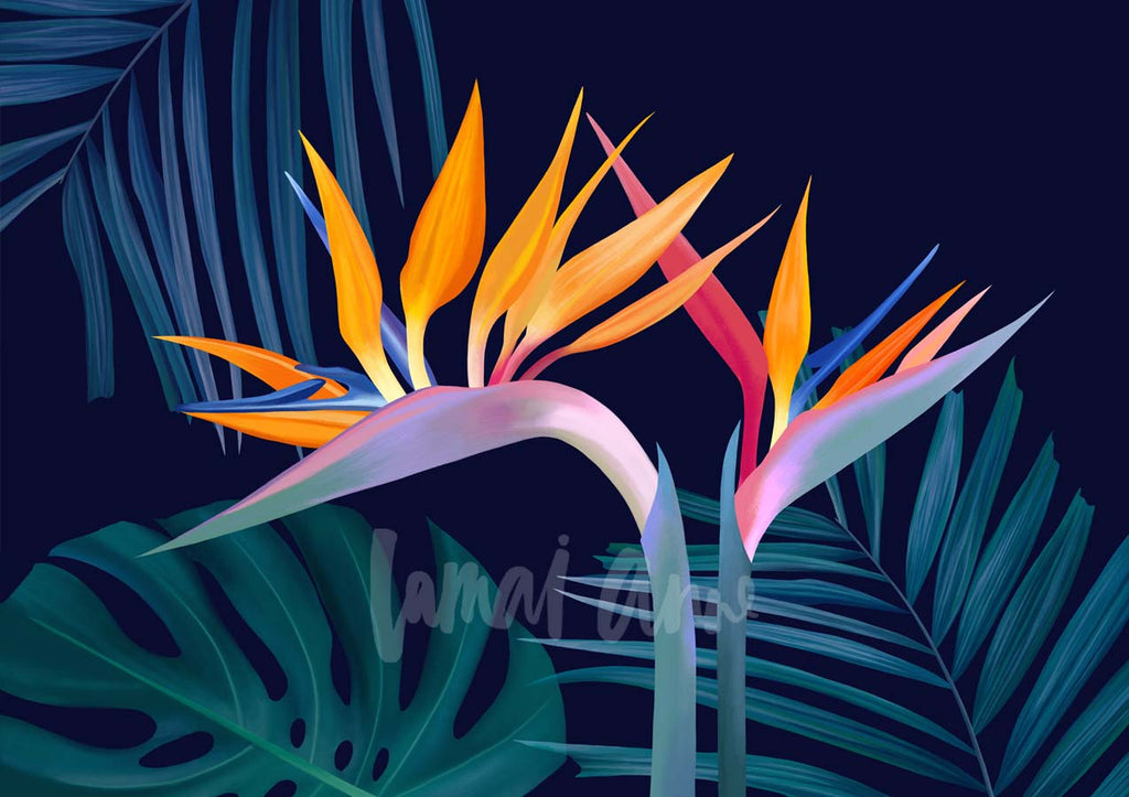 Birds of Paradise Limited Edition Print