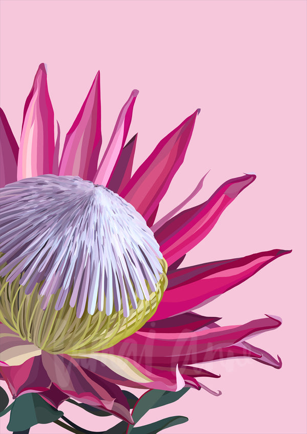 Pink King Protea Limited Edition Print