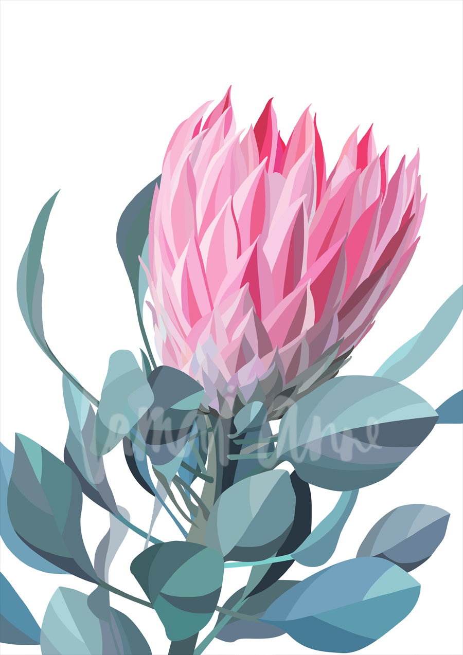 Pink Protea Limited Edition Print