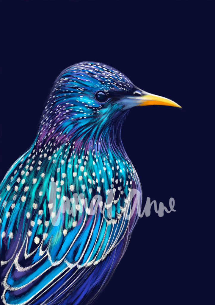 Starling Limited Edition Print