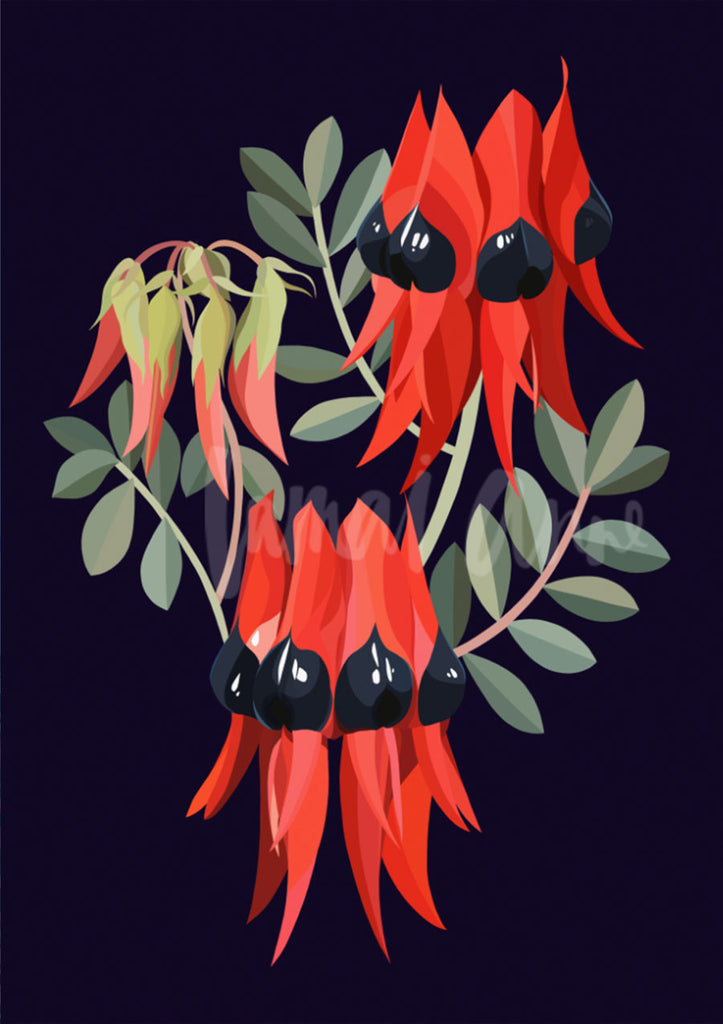 Sturt's Desert Pea on Navy Limited Edition Print