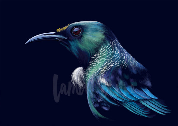 Tui Limited Edition Print