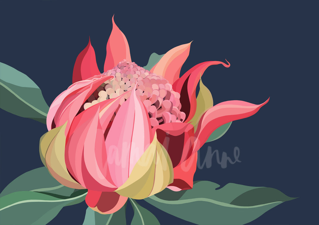 Waratah Bloom Limited Edition Print