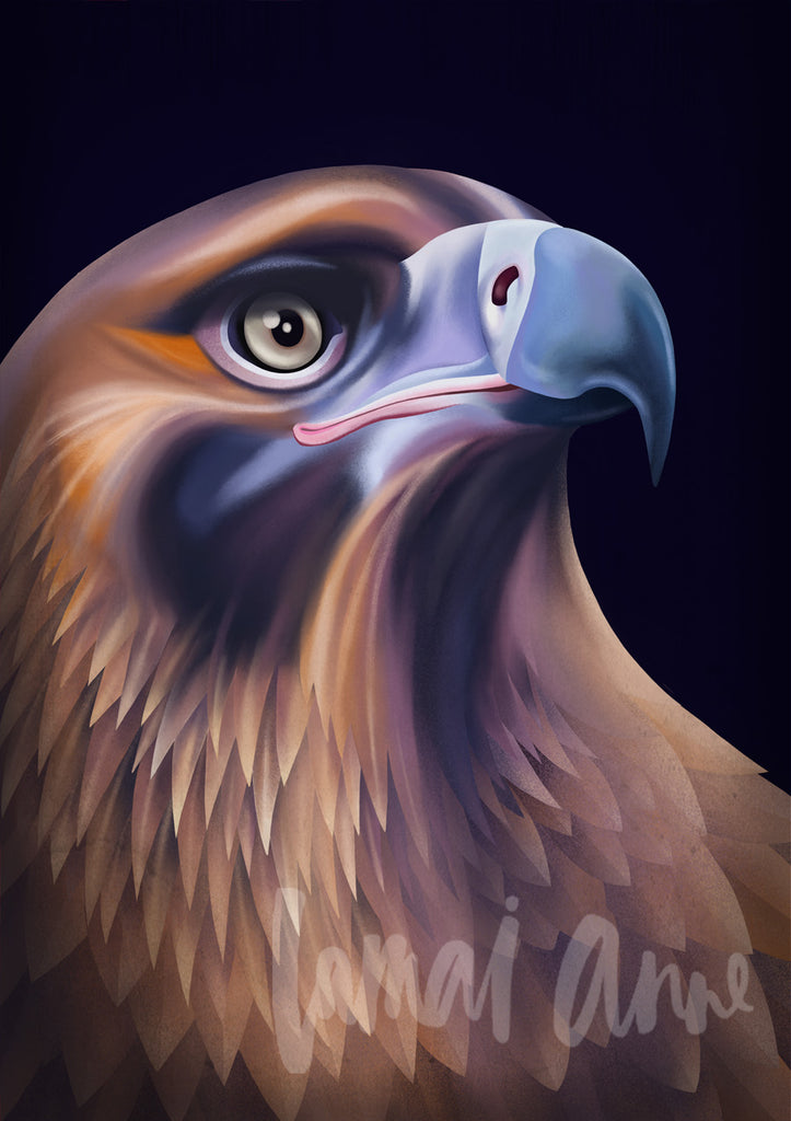 Wedge Tailed Eagle Fine Art Print