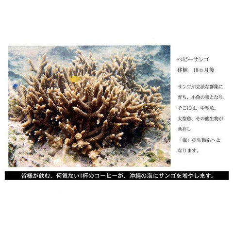 Image of Coral Coffee (Sango Coffee) JFK Blend 200g Coffee Beans / Ground Coffee Food Coffee Beans Tokyo Direct