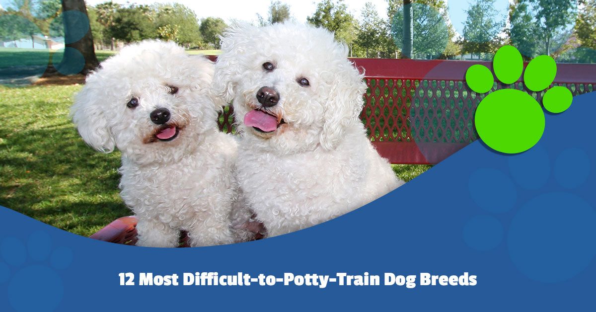 12 Most Difficult-to-Potty-Train Dog Breeds