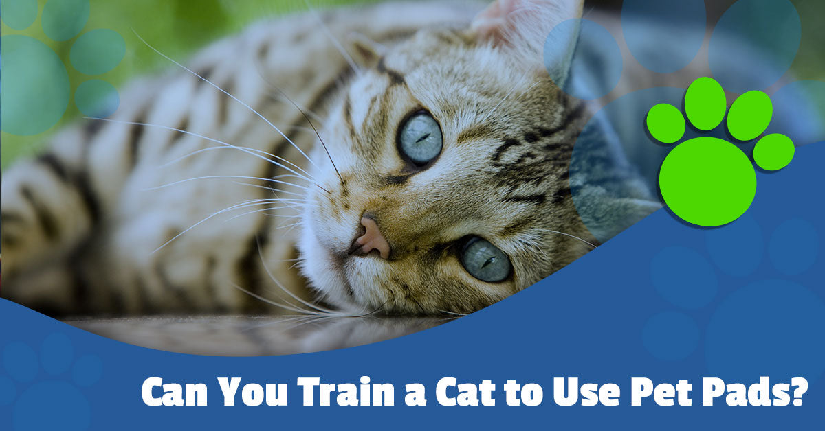 Can You Train a Cat to Use Pet Pads?