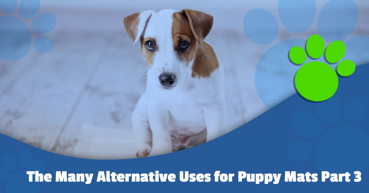 The Many Alternative Uses for Puppy Mats Part 3
