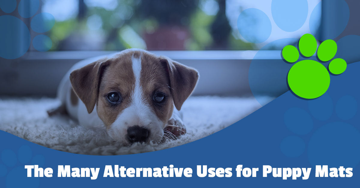 The Many Alternative Uses for Puppy Mats
