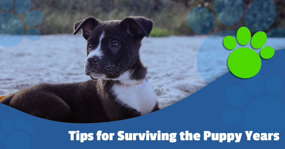 Tips for Surviving the Puppy Years