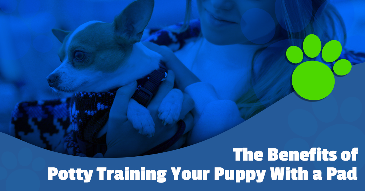 The Benefits of Potty Training Your Puppy With a Pad