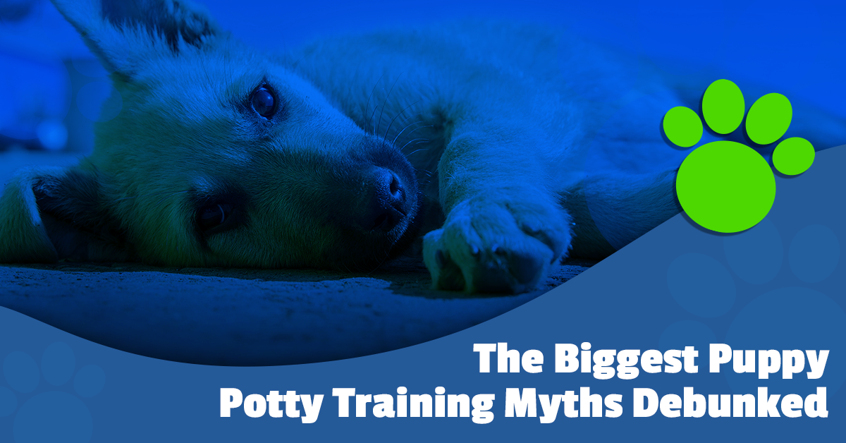 The Biggest Puppy Potty Training Myths Debunked