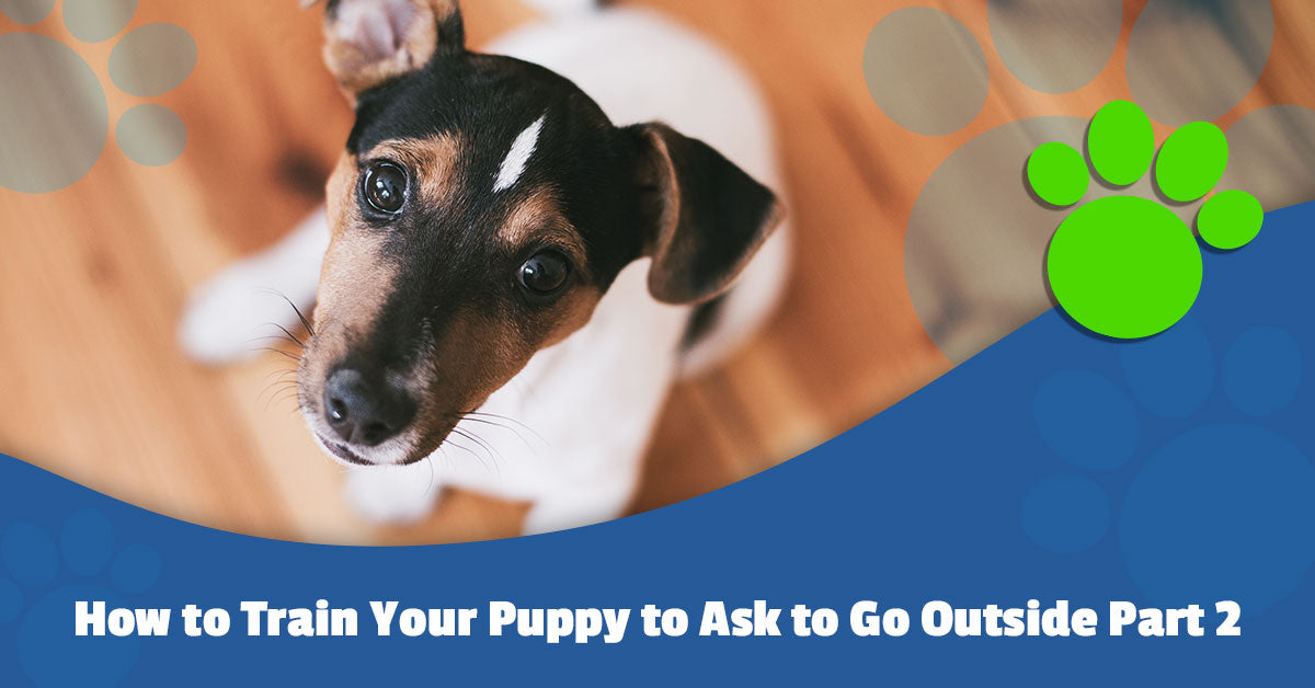 How to Train Your Puppy to Ask to Go Outside Part 2