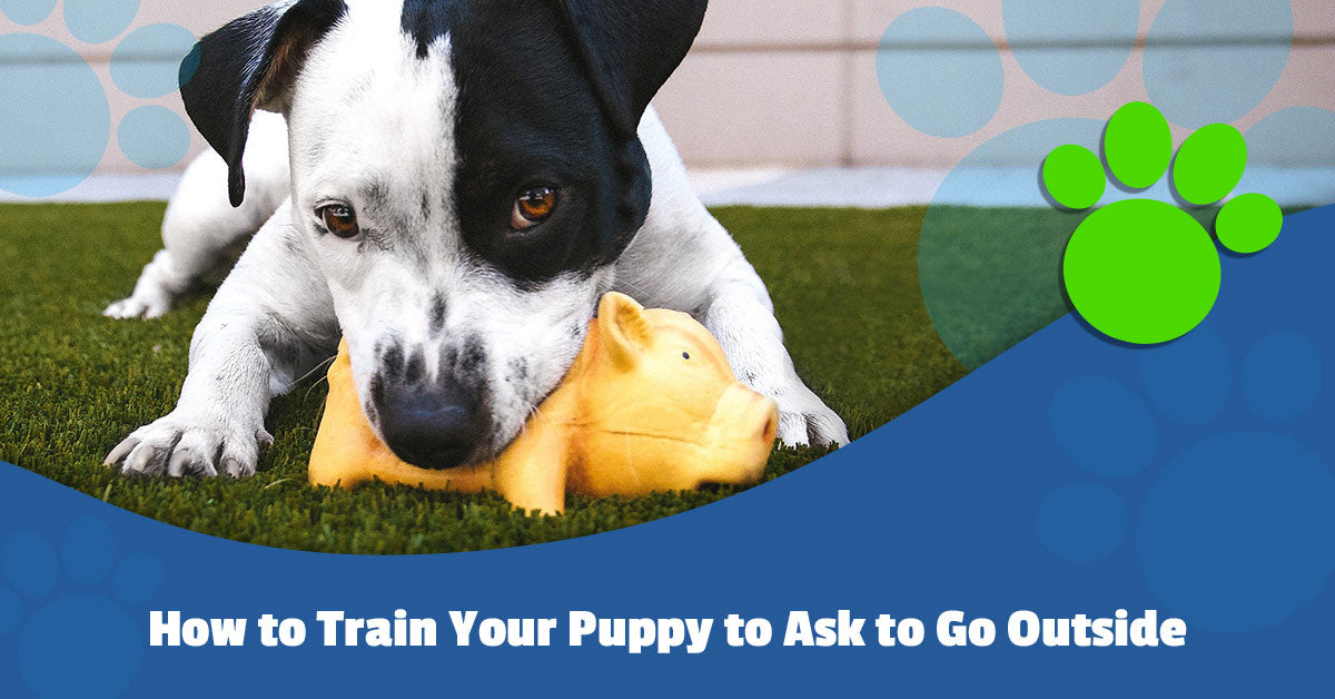 How to Train Your Puppy to Ask to Go Outside