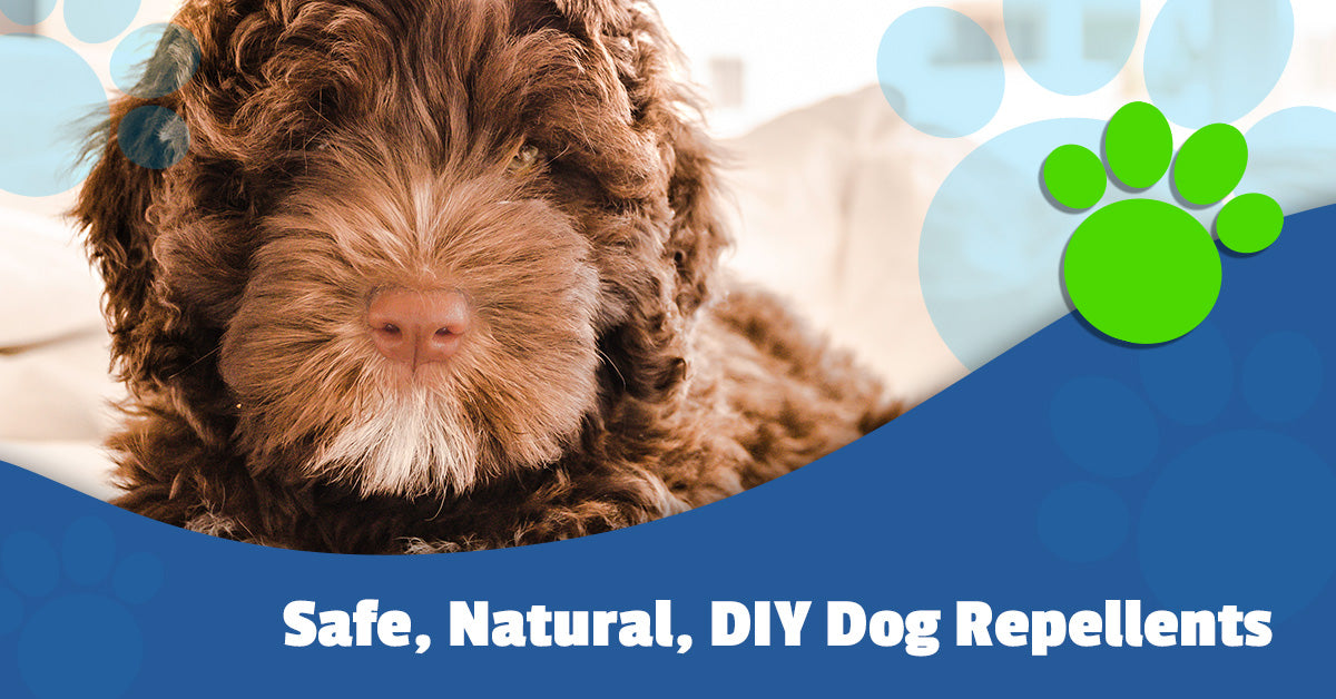 Potty Training Pads Safe Natural Diy Dog Repellents