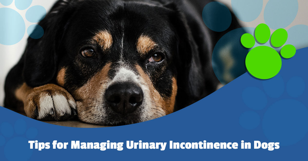 Tips for Managing Urinary Incontinence in Dogs