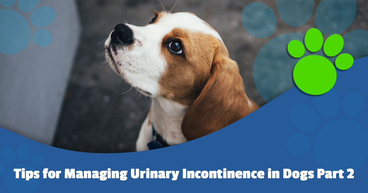 Tips for Managing Urinary Incontinence in Dogs Part 2
